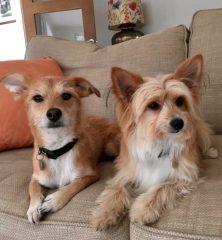 Rudy & Teddy: Mixed Breed Buddies